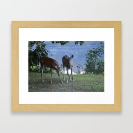 Grazing Deer Framed Art Print
