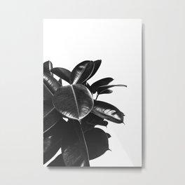 Black Ficus Elastica Metal Print