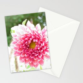 pink vision - pretty bright pink chrysanthemum bathed in sunlight Stationery Cards