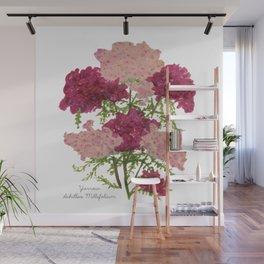 Yarrow: Achillea Millefolium Wall Mural