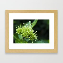 Tiny Young Flora Explosion Framed Art Print