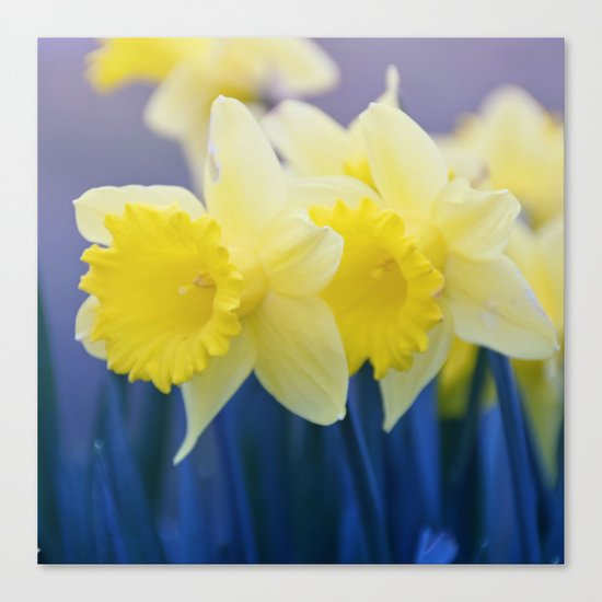 Yellow Narcissus #3 Canvas Print