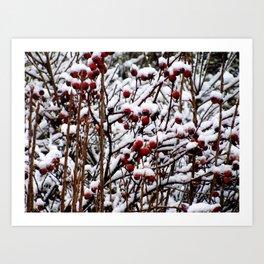 Winterberrys Art Print
