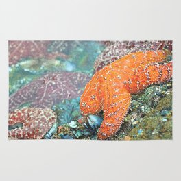 Stained Glass Starfish Rug