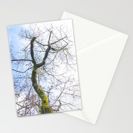 Old curved tree trunk Stationery Cards