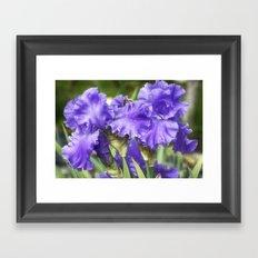 Purple Bearded Irises Framed Art Print