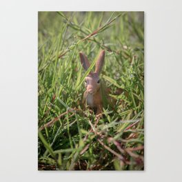 Rabbit (Soft Colours) Canvas Print