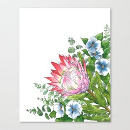 Watercolor Protea Illustration Canvas Print