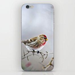 Winter Redpoll Bird iPhone Skin