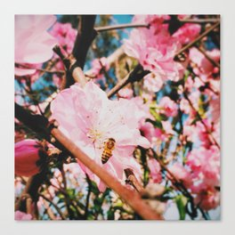 Bee a blossom Canvas Print