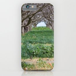Nature - Crow's Landing Trees 1 iPhone Case