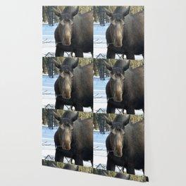 Moose Munching Poplar Lunch Wallpaper