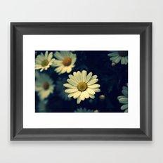 Fresh Daysies flowers 0944 Framed Art Print
