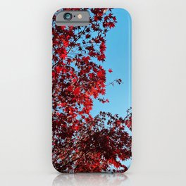 Red on Blue iPhone Case