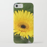 you are my sunshine iPhone & iPod Cases featuring Sunshine  by IowaShots