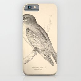 Vintage Print - Companion to Gould's Birds of Australia (1877) - Australian Roller iPhone Case