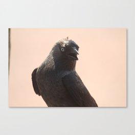 Black Crow Close Up Canvas Print