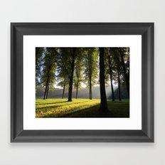 Light-flooded forest Framed Art Print
