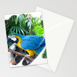 Blue Yellow Macaw. Parrot Stationery Cards