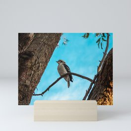 Kookaburra sits in the Old Gumtree. Mini Art Print