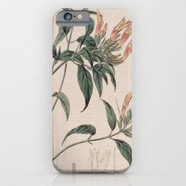 Flower 309 justicia eustachiana St Eustatia Justicia13 iPhone Case
