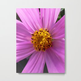fanned out petals Metal Print
