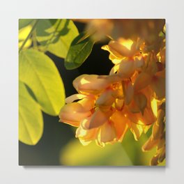 Robinia tree Metal Print