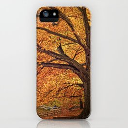 Oak Trees iPhone Case