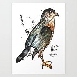 Cooper's Hawk Art Print