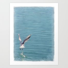 Seagull over the water Art Print