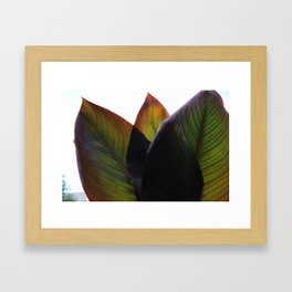 Canna Beleaf Framed Art Print