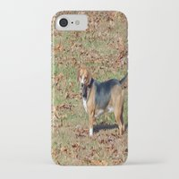beagle iPhone & iPod Cases featuring Beagle by Frankie Cat