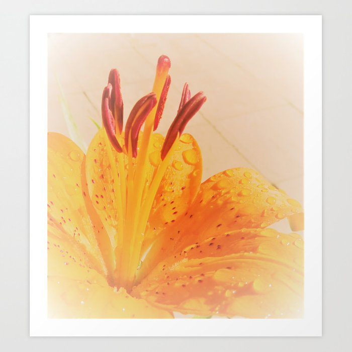 orange lilie Art Print