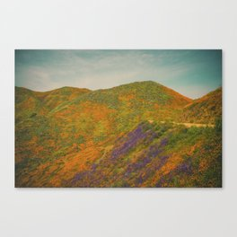 California Poppies 021 Canvas Print