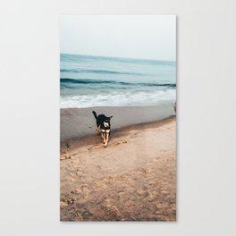 Cute Dog enjoying beach Canvas Print