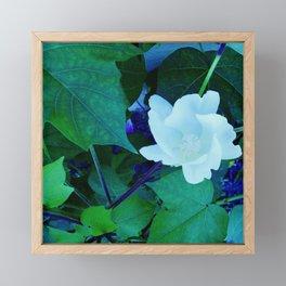 Cotton Blossom Framed Mini Art Print