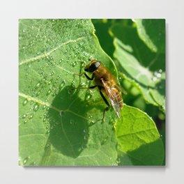 honeybee macro Metal Print