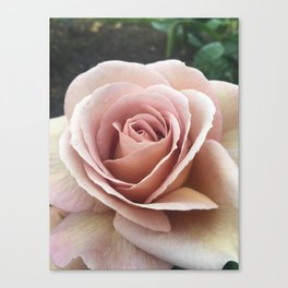 Spiced Coffee Rose Canvas Print