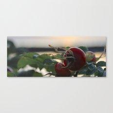 Rose Hip at Sunset Canvas Print