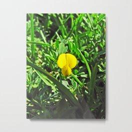 Santa Barbara Flowers 2529 Metal Print