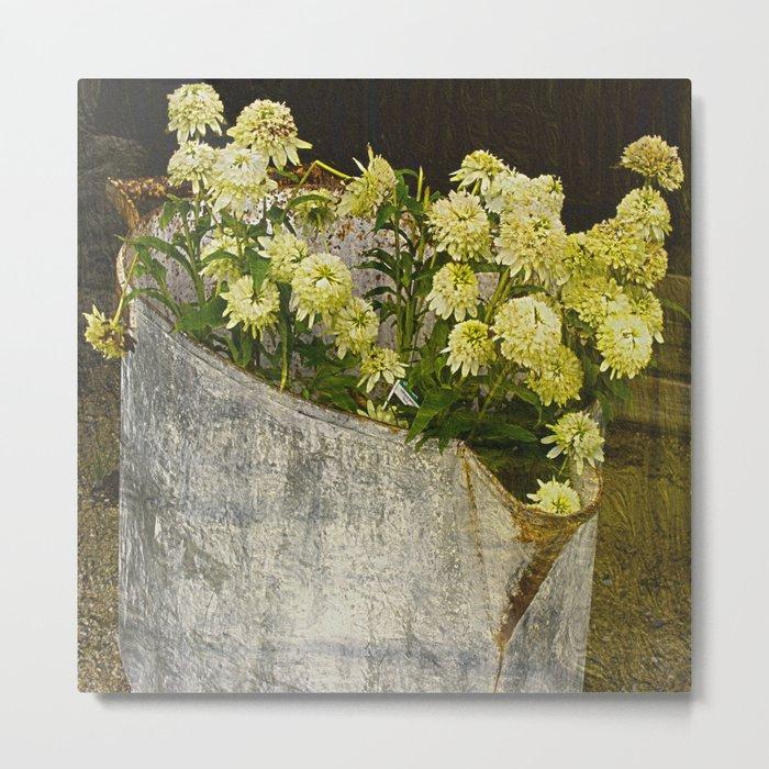 White Coneflowers Metal Print