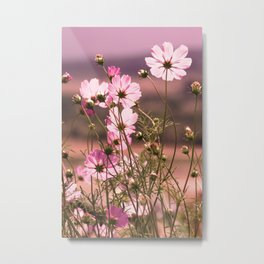 Wild pink meadow flowers III, nature photography, delicate plants field, spring theme Metal Print