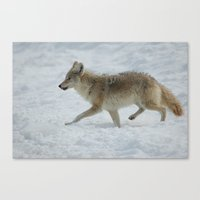 coyote Canvas Prints featuring Coyote. by DC Duke