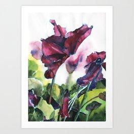 Cyclamen watercolor, pink flowers Art Print
