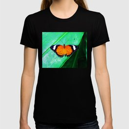 Orange Lacewing Butterfly T-shirt