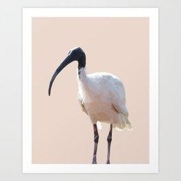 Poly Australian White Ibis Art Print