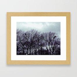 Birds Nest ii Framed Art Print