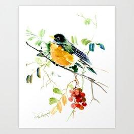 American Robin bird art Art Print