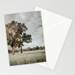 Thai landscape, last sunbeams of the day over paddy field Stationery Cards