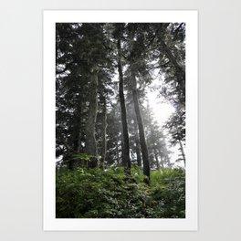 Juneau forest Art Print